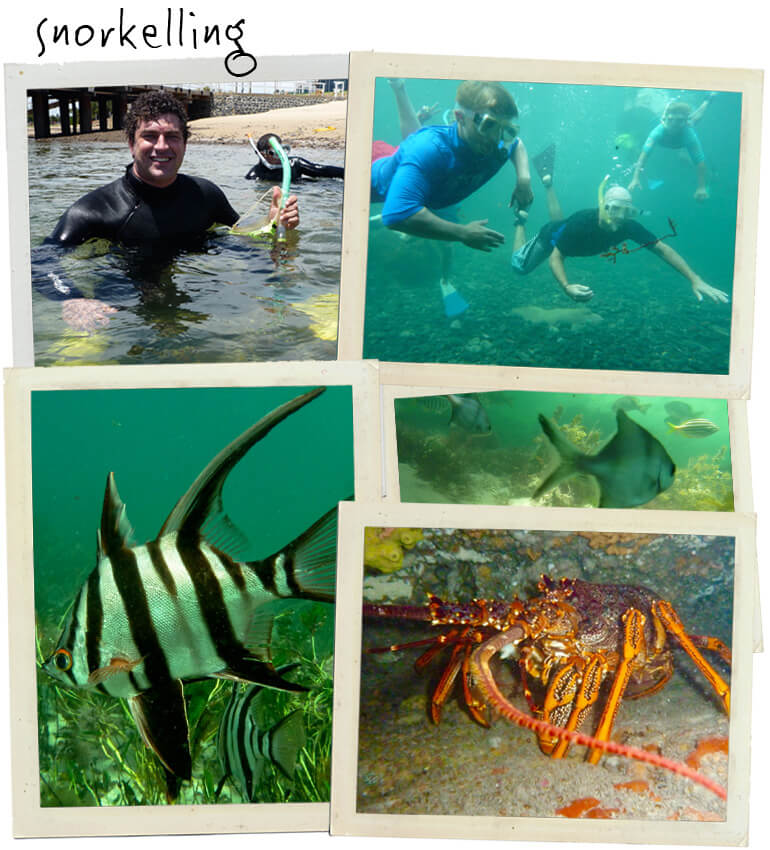 1.Scenic Snorkel GIFT VOUCHER - Click Image to Close